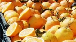 citrus-citrus-fruits-lemon-vitamin-c-wallpaper-preview